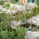 Záhrada vo vreciach