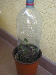 Sklenník z PET fľaše