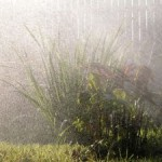 Konečne dážď