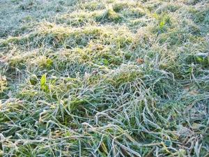 zamrznutá tráva