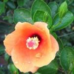 Paličky ku kvetom