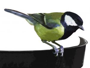garden_birds_1