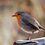 Vianoce aj pre vtáčiky v záhrade