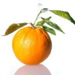 Pestovanie pomarančovníka