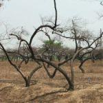 Miesto pre nové stromky