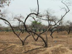 suche_stromy