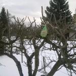 Nezabúdajme na vtáčiky – ochrancov stromov