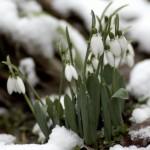 Prvoaprílový sneh