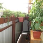 Bohatá úroda aj na balkóne