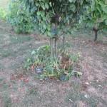 Úmorné sucho trápi rastliny na záhrade
