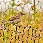 Aj vtáčikom v lete chýba voda