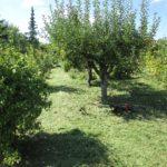 Záhrada predstavuje úsporu, nie náklady