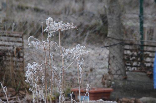 Nový rok v záhrade
