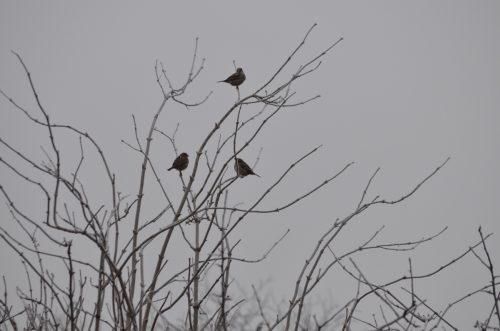 vtáky na strome