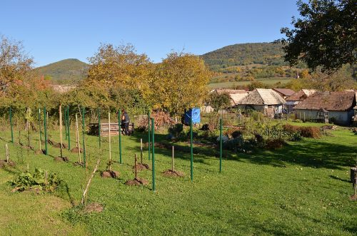 vinohrad