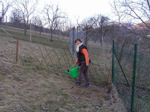 čerstvé sadenice treba poliať