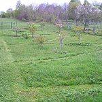 V polovičke apríla sme prvý raz kosili trávu