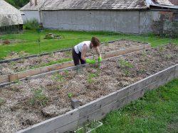 papriky a rajčiny vo vyvýšenom záhone