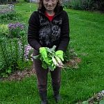 Prvá tohoročná zelenina