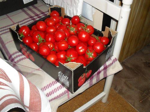 rajčiaky