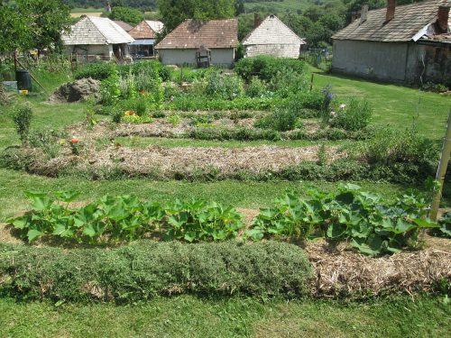 zamulčované záhony v záhrade
