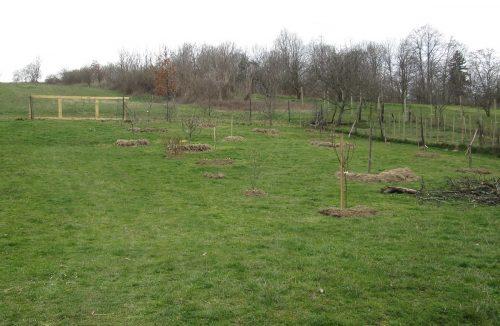 namulčované stromy