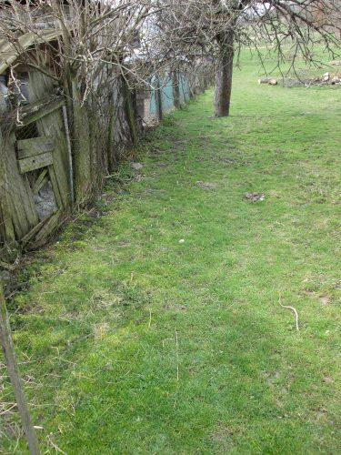 Vysadené vŕby v záhrade